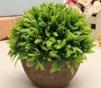 identifying common house plants home design ideas