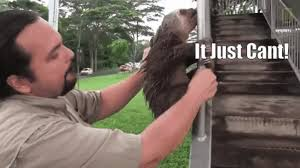 Angry Sloth Meme - always listen to your sloth gif on imgur