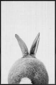 rabbit poster buy framed rabbit posters online juniqe uk