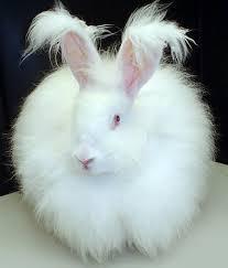 rabbit bunny file fluffy white bunny rabbit jpg wikimedia commons