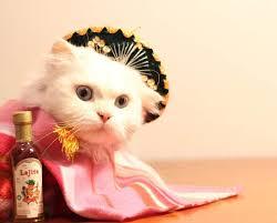Kitten Halloween Costumes Pet 85 Cute Halloween Pet Costumes Charm Dazzling Pets