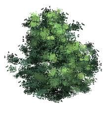anime type tree leaves brush xd by xong on deviantart
