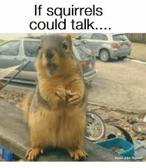 Squirrel Meme - if squirrels could talk kevin john stewart meme on me me