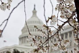 at least 3 cherry blossom varieties could survive the freeze