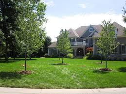 Trees Backyard Affordable Trees Portfolio Of Work