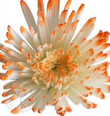 Thanksgiving Flowers Thanksgiving Flowers U2013 Bloomingmore