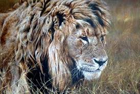 lions for sale original lion paintings for sale wildlife artist alan m hunt