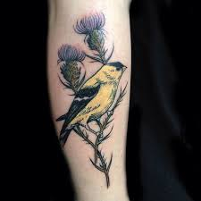 golden finch by tattoo artist evan davis at banshee tattoo in