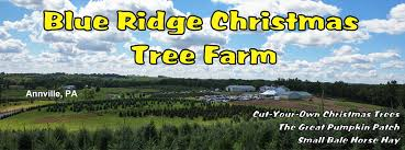 cut your own tree annville blue ridge christmas tree farm