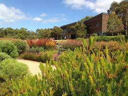 native plants of western australia natives 3 tips for a high impact australian garden u2013 janna