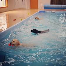 canine swimming pool