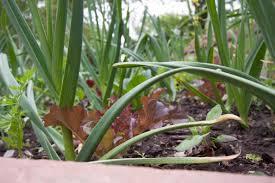 10 fall turn down garden tips the organic forecast