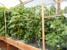 portable farms aquaponics systems gardening pinterest
