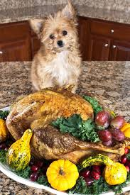 thanksgiving leftovers you can give your pet and those you cant