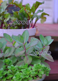 Plants For Patio by Easy Plants You Can Grow On Any Sized Deck Or Patio