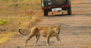 India wildlife adventure tour packages best wildlife tours in