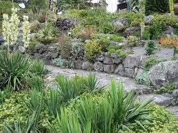 Rock Garden Succulents Succulent Rock Garden Gardens Succulent Gardening And Succulent