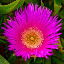 free photo plant nature flower garden free image on pixabay