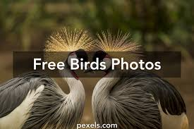 birds images pexels free stock photos