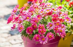 balkon grã npflanzen wie pflanze und pflege ich balkonpflanzen ratgeber
