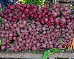 Fall Vegetable Garden Ideas by 49 Best Growing Beets Images On Pinterest Gardening Tips