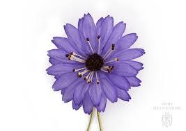 boutonniere pins violet marguerite silk boutonniere lapel pin flower fort belvedere