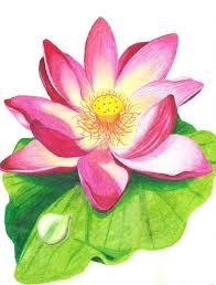 pencil sketch of lotus lotus flower drawn with crayons coloring