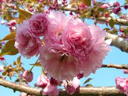 ornamental trees garden supply company
