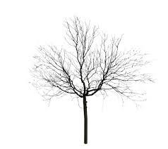 wind projection basis for real time animation of trees