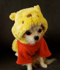 Cheap Dog Costumes Halloween 20 Adorable Ways Embarrass Pet Halloween Dog Dog