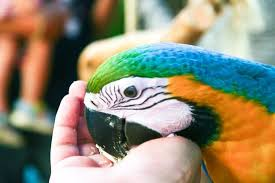 what your macaw wishes it could tell you reader s digest