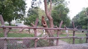 owl in tree picture of park bhavnagar tripadvisor