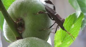 garden pest management the how do gardener