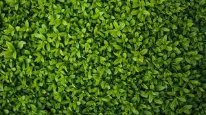 tiny leaves texture wallpaper mobile u0026 desktop background