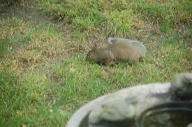 2012 the year in rodents u2013 gardeninacity