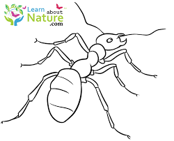 learn about nature ant coloring page learn about nature