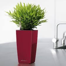 lechuza maxi cubi self watering planter hayneedle