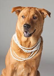 Comfort Dogs Certification Meet Our Grief Comfort Dog Butler Funeral Homes U0026 Cremation