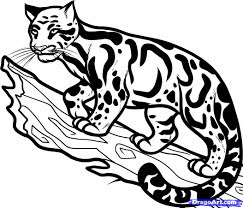 leopard clipart clouded leopard pencil and in color leopard