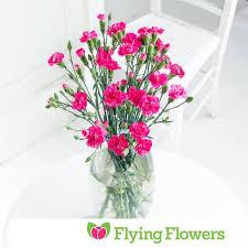 carnations flowers flying flowers spray carnations from ocado