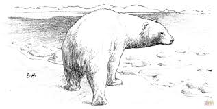 polar bear walks ice coloring free printable coloring pages