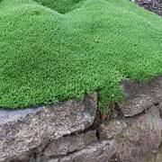 Garden Express Summer Catalogue - suntuf walkway cover colombia roofing pinterest walkways