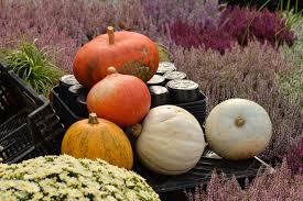 free images food produce vegetable pumpkin garden calabaza
