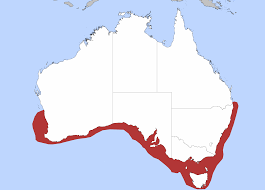 Shark Map Of The World by File Gummy Shark Png Wikimedia Commons