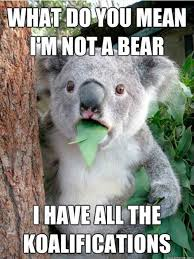 Random Funny Memes - i have all the koalifications funny random meme