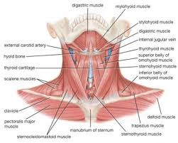 Muscle Spasms Versus Muscle Twitching by Understanding The Causes Of Muscles Spasms In The Neck