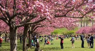 Prospect Park Botanical Garden Botanic Garden Review Fodor S Travel