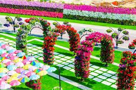 dubai miracle garden ariel view dubai miracle garden