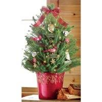 Decorated Live Christmas Trees Tabletop by 9 Best Pre Decorated Live Christmas Trees Images On Pinterest