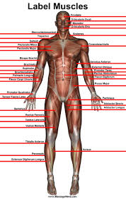 Dermatomes Map 175 Best Pain And Spine Rx Images On Pinterest Chronic Illness